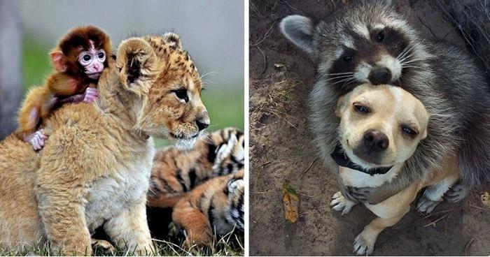 Photo of Divne fotografije ČAROBNIH PRIJATELJSTAVA između životinja