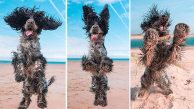 Photo of Pas je TOLIKO uživao na plaži da je ZARAZIO SVE SVOJOM SREĆOM (VIDEO)