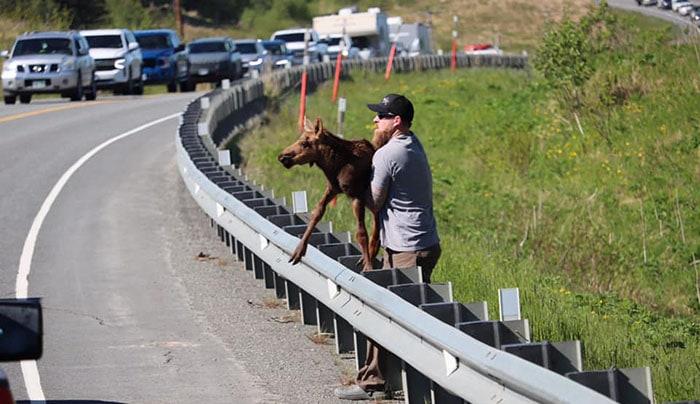 Photo of Čovek je POMOGAO BEBI LOSU da pređe autoput kako bi PONOVO BILA SA MAJKOM