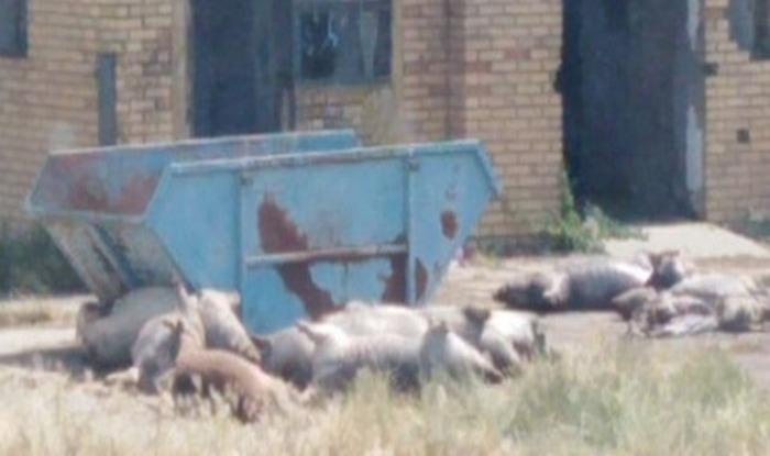Photo of Više od 50 leševa životinja na NEUREĐENOM STOČNOM GROBLJU kod Čantavira?!