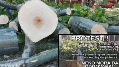 Photo of U Pančevu se UPRAVO ODRŽAVA PROTEST zbog NELEGALNE SEČE PLATANA