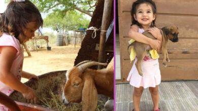 Photo of Ljubav prema životinjama: Ova devojčica HRANI KOZU SA INVALIDITETOM i svakodnevno o njoj brine