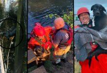 Photo of Predivni ljudi: Vatrogasci IZVUKLI POVRE�ENOG PSA IZ KANALA u Oregonu