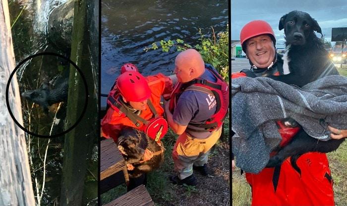 Photo of Predivni ljudi: Vatrogasci IZVUKLI POVREĐENOG PSA IZ KANALA u Oregonu
