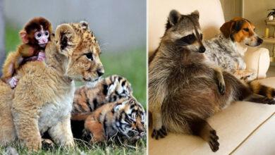 Photo of OČARAVAJUĆE: Fotografije prijateljstva različitih vrsta životinja