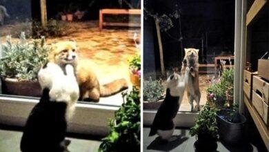 Photo of Lisica i mačka čine sve da NASTAVE SVOJE PRIJATELJSTVO, čak i preko prozora