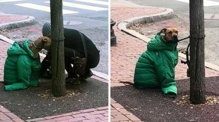 Photo of DA MU NE BUDE ZIMA: Vlasnica je morala u poštu, ali ne pre nego što je psu OBUKLA JAKNU