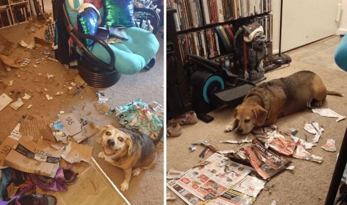 Photo of Pas jedva čekao da pokaže vlasnicima ŠTA JE SVE LEPO I KREATIVNO NAPRAVIO dok nisu bili kod kuće