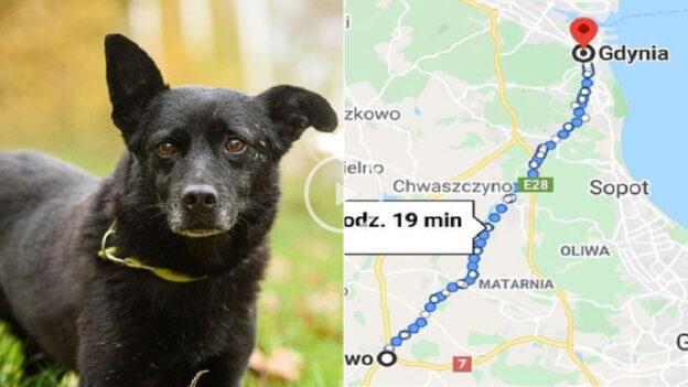 Photo of Pas se VRATIO VLASNIKU nakon PETODNEVNOG PUTOVANJA od skoro 30 km