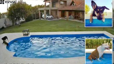 Photo of Spasila svoju slepu 14-godišnju sestru pitbula od utapanja, nakon ŠTO JE UPALA U BAZEN (VIDEO)