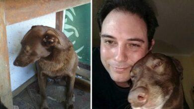 Photo of Izgubljeni pas NIJE MOGAO DA VERUJE da posle 2 godine OPET vidi svog vlasnika! (VIDEO)