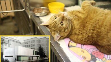 Photo of U planu IZGRADNJA KLINIKE ZA MALE ŽIVOTINJE Fakulteta veterinarske medicine u Beogradu