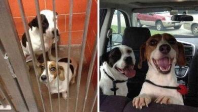 Photo of KAD FOTOGRAFIJAMA NE TREBAJU REČI: Dva psa – u azilu i kada su udomljeni!
