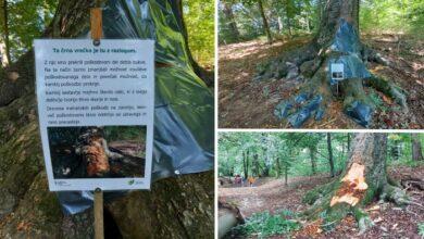 """Photo of SLOVENIJA: Kad plastika POMAŽE drvetu – """"Ova crna kesa je tu sa razlogom"""""""