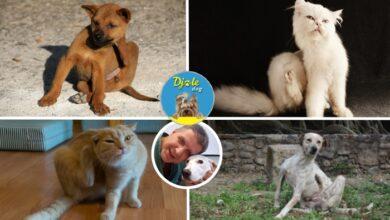 Photo of Djole dog razgovor sa veterinarom: ALERGIJE KOD PASA I MAČAKA