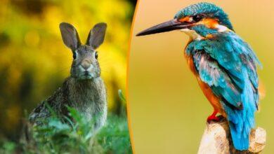 Photo of Istraživanje: Životinje MENJAJU FIZIONOMIJU zbog globalnog zagrevanja?