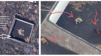 Photo of Dronovima DOSTAVLJAJU HRANU PSIMA koji su zarobljeni na španskom ostrvu La Palmi NAKON ERUPCIJE VULKANA