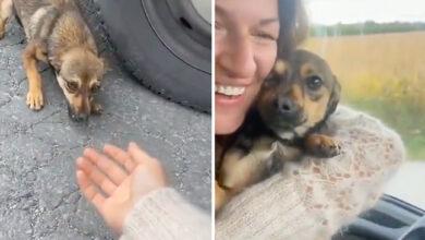 Photo of OD STRAHA DO ZAHVALNOSTI: Uplašeni psić CVILEO I PLAKAO pre nego što je dozvolio da mu spasioci priđu (VIDEO)