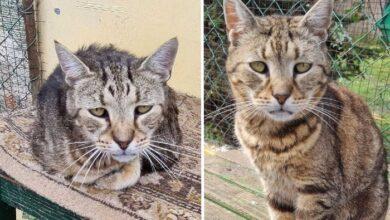 Photo of Priča o drevnom mačku Gideonu, iz azila za mace u Vojvodini: VITALAN I U 25. GODINI