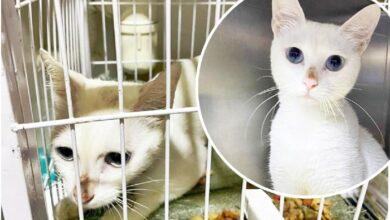 Photo of Hong Kong: Muškarac UHAPŠEN nakon što je ostavio mačku samu u stanu – GLADNU I DEHIDRIRANU
