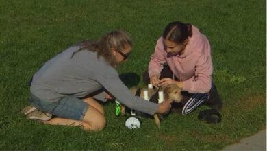 Photo of Tinejdžerka PRAVI INVALIDSKA KOLICA za životinje sa invaliditetom kako bi im pomogla da ponovo hodaju (VIDEO)