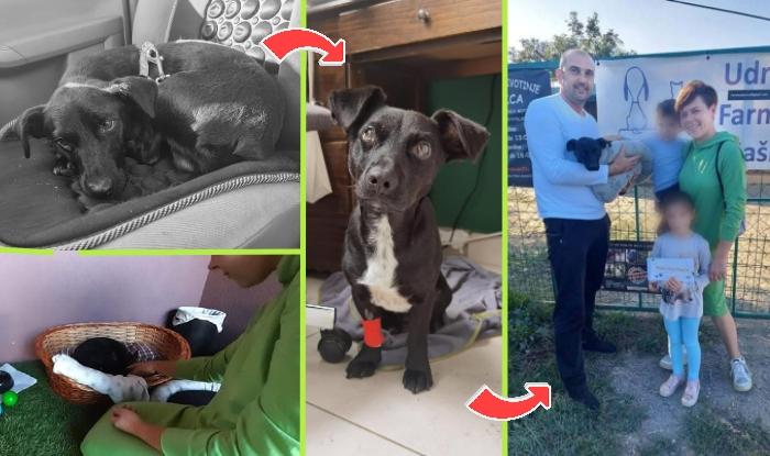 Photo of Sećate se pretučenog psa Montija iz Našica? NAJSREĆNIJE VESTI vam stižu od ovog junaka!